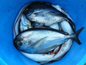 fish-422543_1920